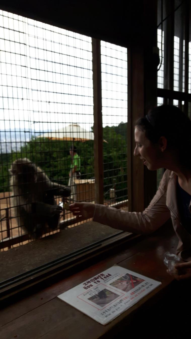 Podem comprar comida no local e oferecer aos macacos, eles sabem pedir.