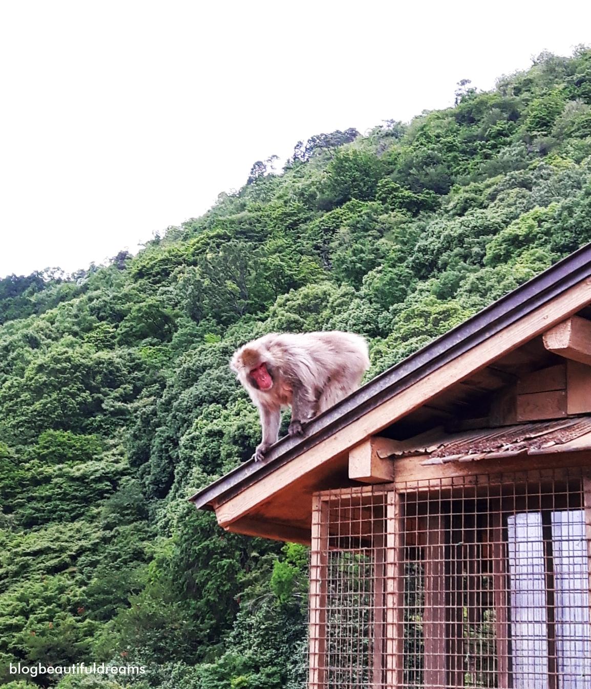 É importante lermos as condições de segurança para visitar-mos estes animais.
