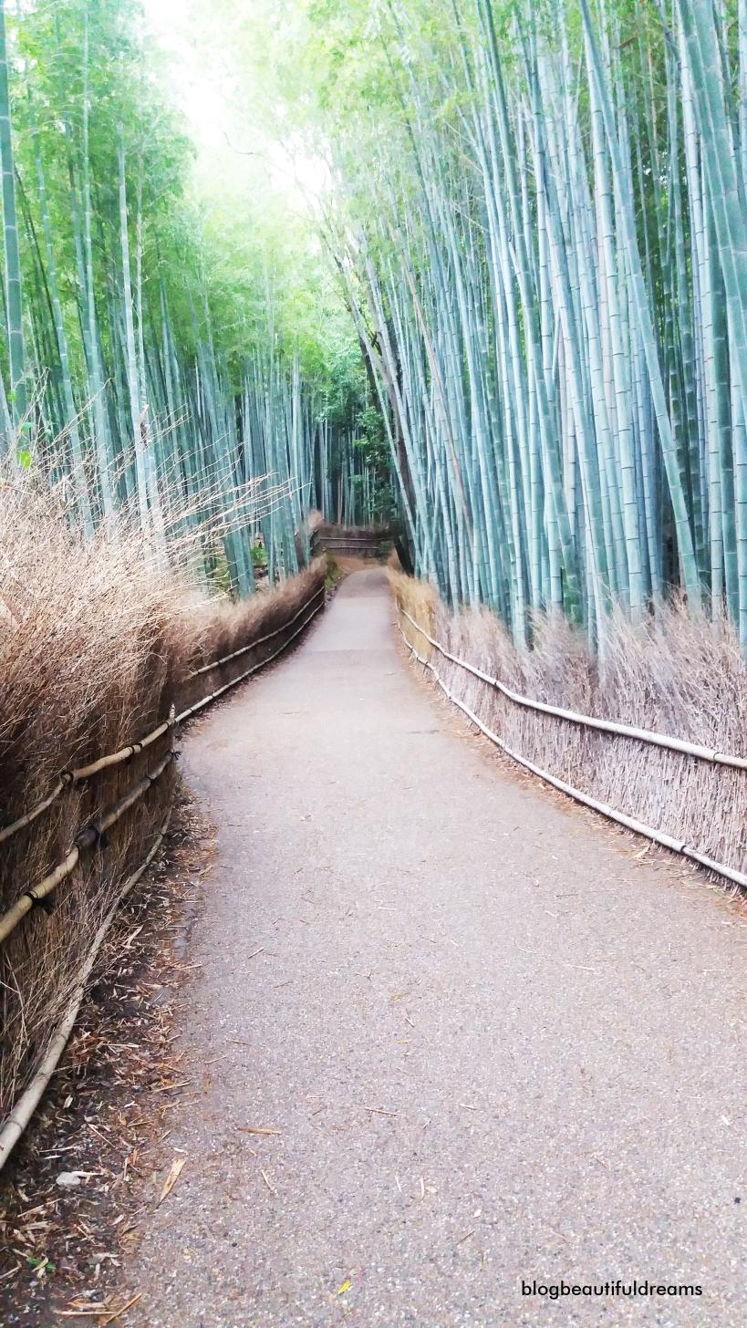 Beleza natural deste Parque de Bambus. Uma visão quase sinistra, mas muito tranquilizadora